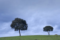 Two trees in the meadow, with a dark cloudy sky Stock Image
