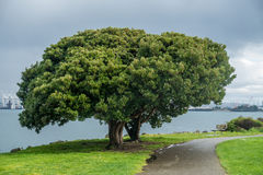 Two Trees Merge Into One Royalty Free Stock Photos