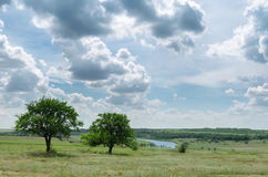 Two trees near river and dramatic sky Stock Photography