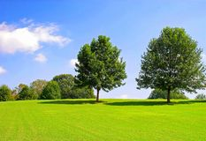 Free Two Trees On Hill Stock Image - 139776271