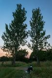 Two Trees One Dog royalty free stock photo