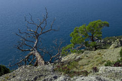 Two trees over the sea. Royalty Free Stock Image