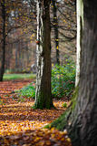 Two Trees in a park. Trees in the park Karlsruhe, Germany royalty free stock photos