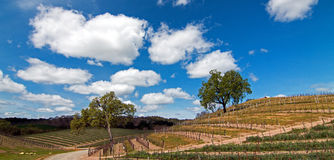 Two Trees in Paso Robles Wine Country Scenery Royalty Free Stock Photo