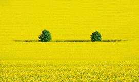 Two trees in Stock Images