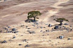 Two trees and rocks on a sueded Royalty Free Stock Photo