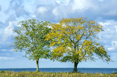 Two trees on seaside Royalty Free Stock Photos