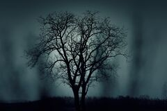 Two trees side by side Royalty Free Stock Photography