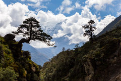 Two trees silhouette above mountain canyon gorge river. Royalty Free Stock Image