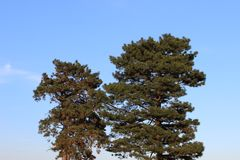 Two trees on the sky stock photography