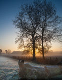 Two trees slhouetted in the frost at sunrise Royalty Free Stock Image