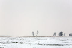 Two trees in the snow field Stock Photo