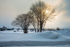 Two trees in the snow scene. Backlight, sunlight, silhouette royalty free stock images