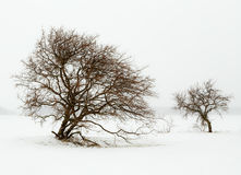Two trees. In snowfall on seashore Royalty Free Stock Images