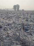 Two trees on snowy field Stock Photography