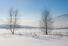 Two trees on snowy field Royalty Free Stock Photography