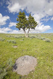 Two trees, spring flowers and mountains in in Centennial Valley near Lakeview, MT Stock Photo