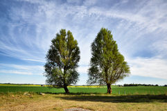Two trees in spring Stock Photos