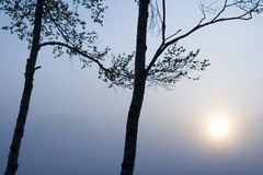 Two Trees with Sun Royalty Free Stock Photography