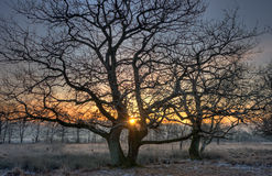 Two trees at sunrise Stock Photos