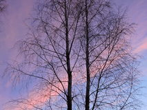 Two trees in sunrise colors background Stock Photos