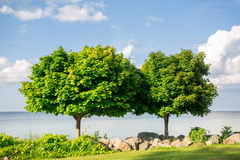 Two trees Royalty Free Stock Photo