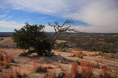 Two trees on top of enchanted rock Royalty Free Stock Images