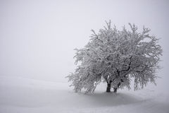 Two trees united under heavy snow Royalty Free Stock Photography