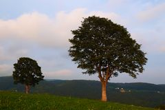 Two trees in a valley stock photography
