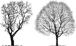 Two trees. Vector image of the silhouettes of the trees royalty free illustration