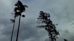 Two trees waving in the wind stock footage