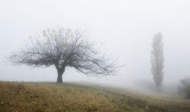 Two trees: wide and tall stock photography