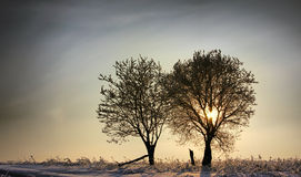 Two trees in a winter sunset Stock Photography