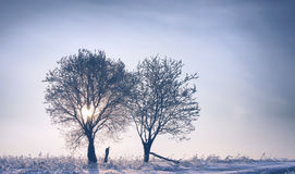 Two trees at winter sunset Royalty Free Stock Image