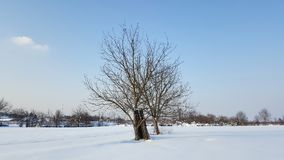 Two trees in winter surrounded with snow Royalty Free Stock Photography
