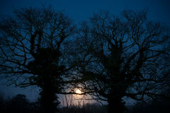 Two Tress at Moonlight Royalty Free Stock Image