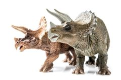 Triceratops on white background royalty free stock images