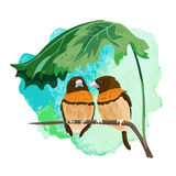 Two tropical birds Royalty Free Stock Photo