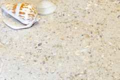 Two tropical shells in top left, sandy beach vacation background Royalty Free Stock Photography