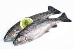 Two trouts Stock Image