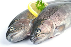 Two trouts Royalty Free Stock Image