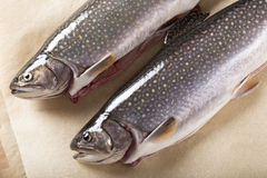 Two trouts Royalty Free Stock Photo