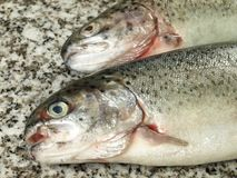 Two trouts, closeup Royalty Free Stock Image