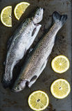 Two trouts Stock Photos