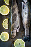 Two trouts Royalty Free Stock Images