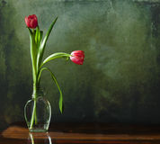 Two tulips in glass vase Stock Photo