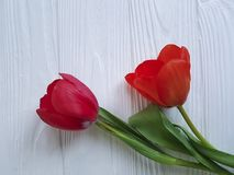 Two tulips on white wooden, sadness mourning. Two tulips on white wooden mourning sadness Royalty Free Stock Images
