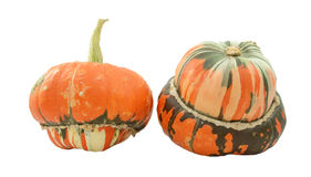 Two turban squash, one with stem, one showing striped gourd Royalty Free Stock Photos
