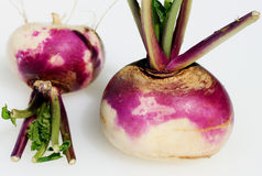 Two turnips. Two fresh whole turnips with the green leaves left on against a white background royalty free stock photo