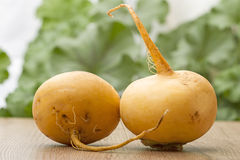 Two turnips on the table Stock Image